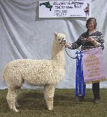 Alpaca shearing services in New England.