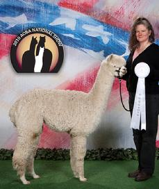 Inti B My Girl, shown winning 3rd place at the 2010 AOBA National Show, she is a 2 time Champion daughter of Maple Brook Bolero.